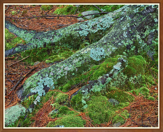 Roots, Lichens & Moss