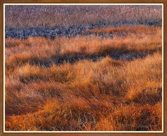 Saltgrass & Cattails