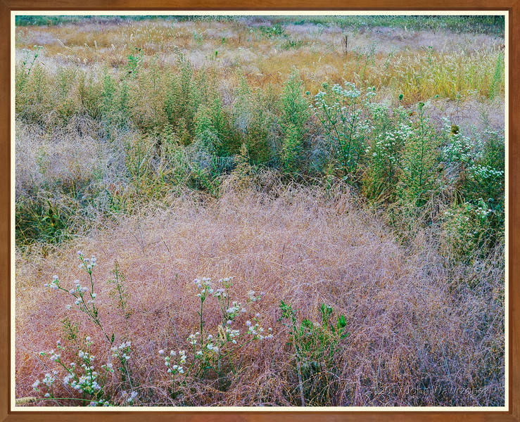 Meadow with Morning Dew