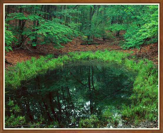 Vernal Pool, Near Thoreau's Cabin I