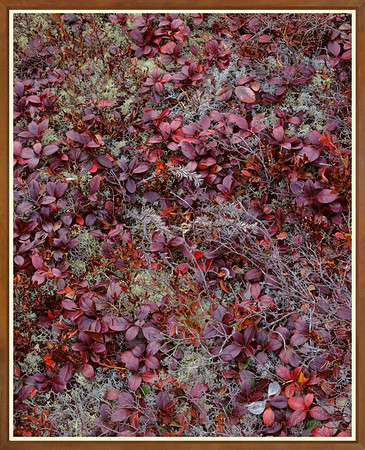 Lichens And Teaberry Leaves