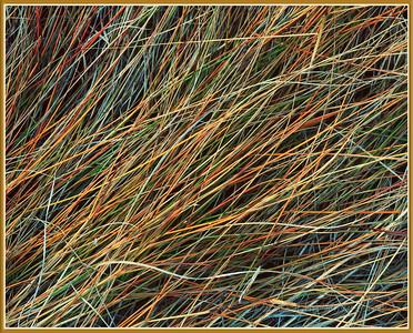 Salt Marsh Grass