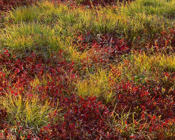 Blueberries & Grasses II