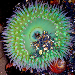 BILL'S SEA RANCH TIDE POOL