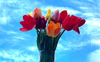 """""""Marju & Kiera's Tulips"""" by Susanne Paynovich"""