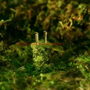 Plug in Moss