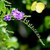 Dina Yellow - Top Wings
