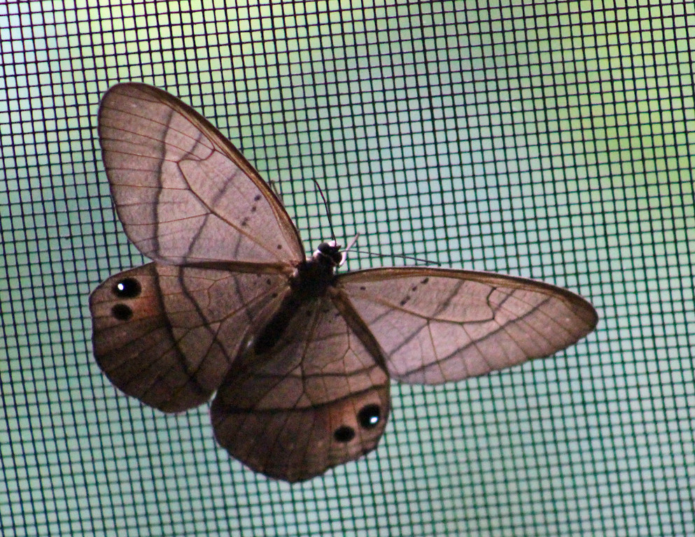 Unknown Moth #2