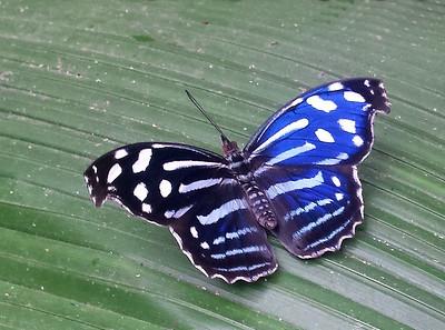 Butterflies & Moths (80+ Species)