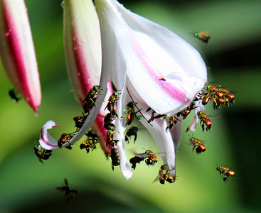 Unidentified Bees