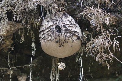 Unknown Insect Nest