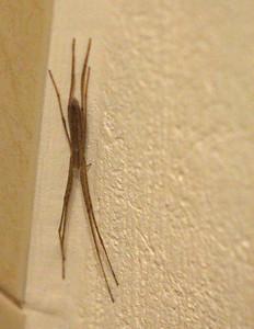 Spider Unknown