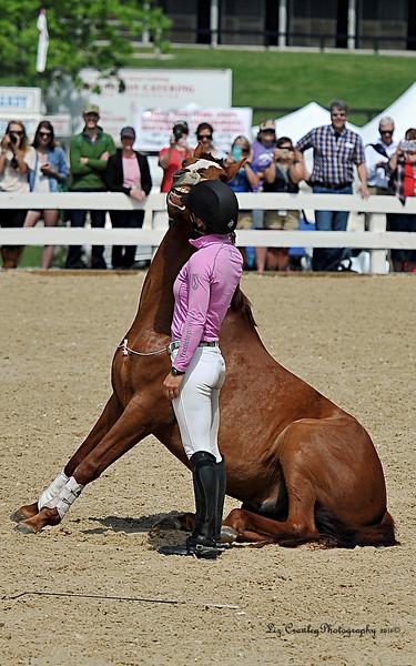 Atlanta Horse Connection Magazine