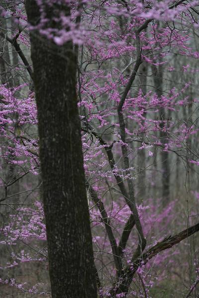 Serenity - Redbud Valley in the Ozarks - Cass, Arkansas - Spring 2021