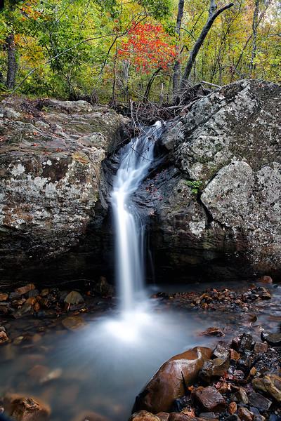 Tree of Life - Ouachitas of Arkansas - Fall 2014