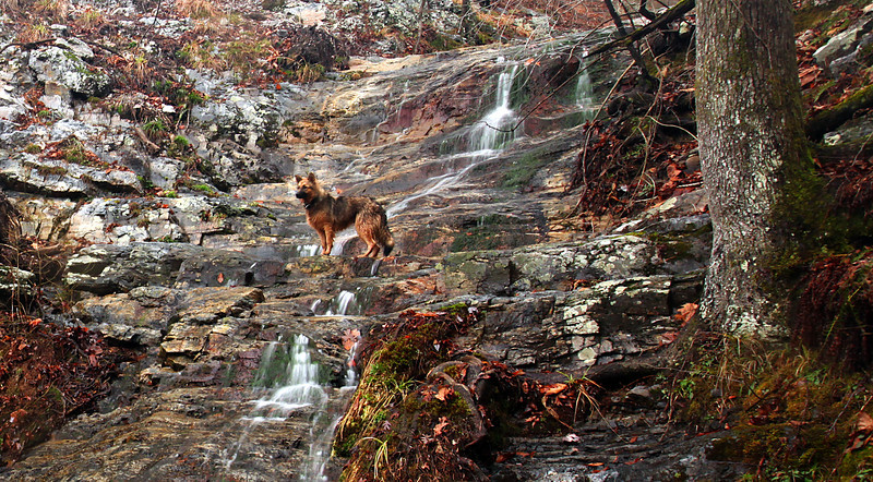 Bear Falls with my german shephard in the Ouachitas.