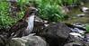 Red Tail Hawk - Ouachitas of Arkansas