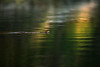 Copper Head - Ouachita River - Arkansas