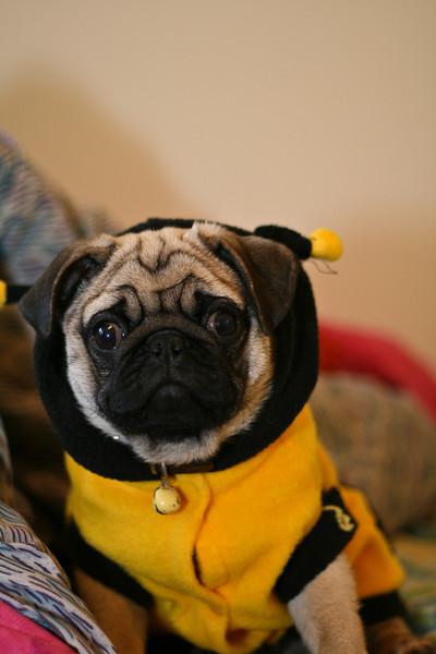 Stitch Bee-