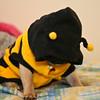 Stitch Bee-5