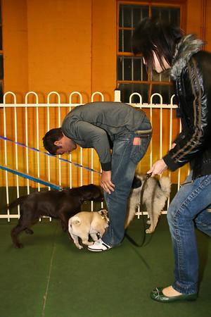 COMMAND DOG GRADUTATION