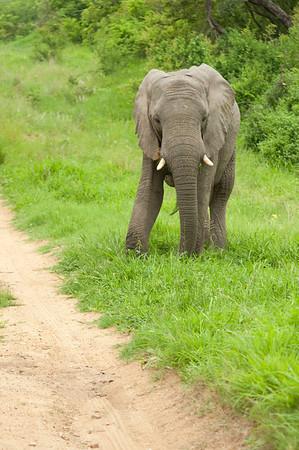 HONEYMOON: CHAPUNGU, SOUTH AFRICA 2010