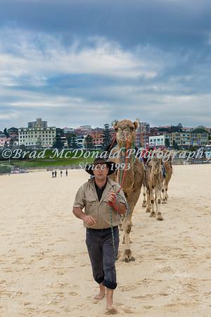 BRAD McDONALD CAMELS BONDI 201607170109