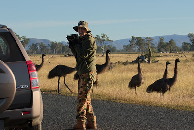 Not too often that one meets 15 inquisitive emus wanting to check you out ! Someone had an ear to ear grin !