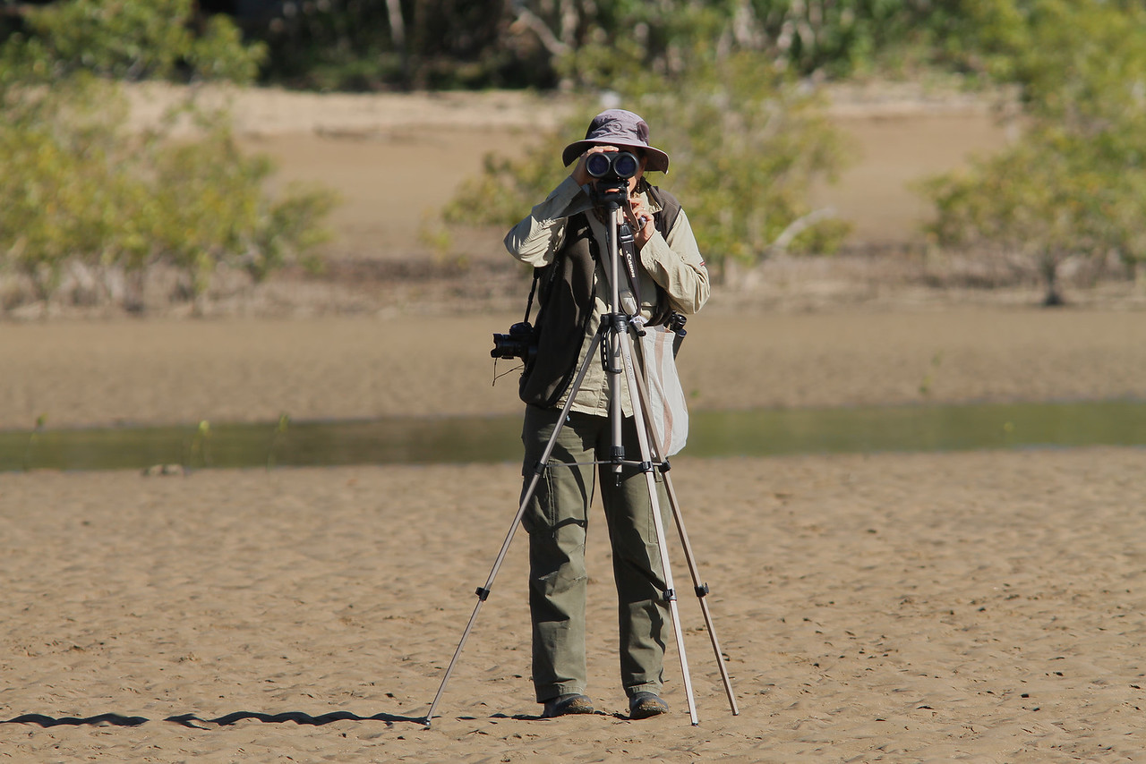 COUNTING SHOREBIRDS AT ST HELENS BEACH