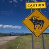 Elk Caution.  Approaching Cimarron, New Mexico