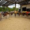 Saddles.  HF Bar Ranch #8, Wyoming.