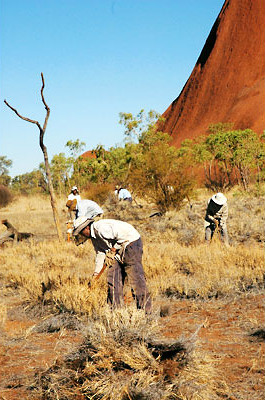 Tending the Grounds at Uluru<br /> Northern Territory