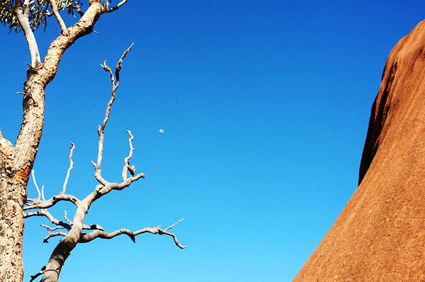 Tree at Base of Uluru<br /> Northern Territory