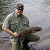 Native Steelhead