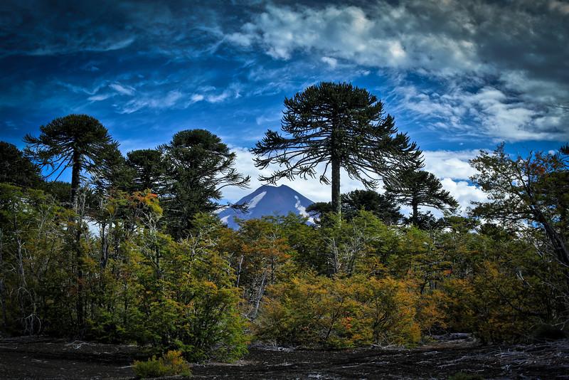 Parque Nacional Conguillīo - Chile