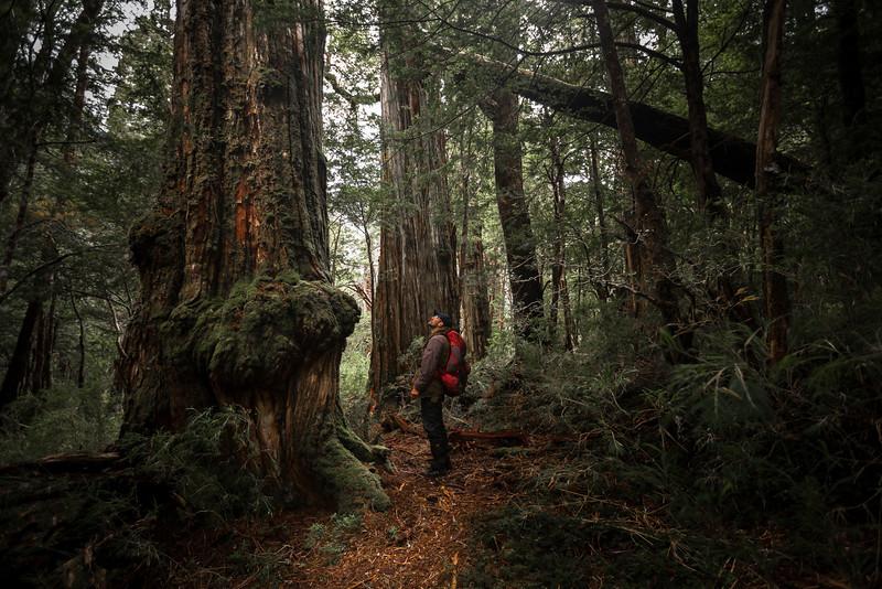 Parque Tagua Tagua, Región de los Lagos - Chile