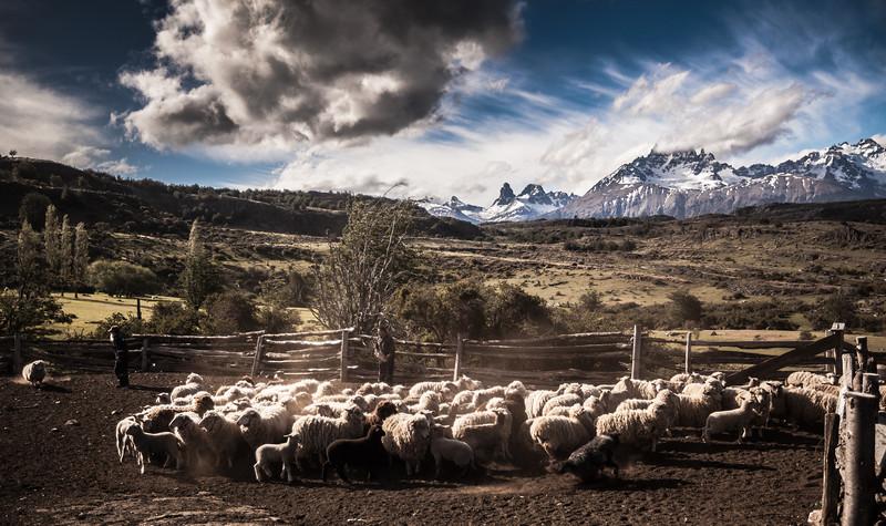 Tamango, Región de Aysén - Chile