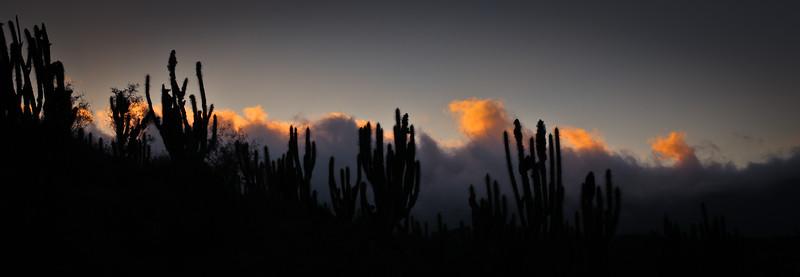 Fray Jorge, Región de Coquimbo - Chile
