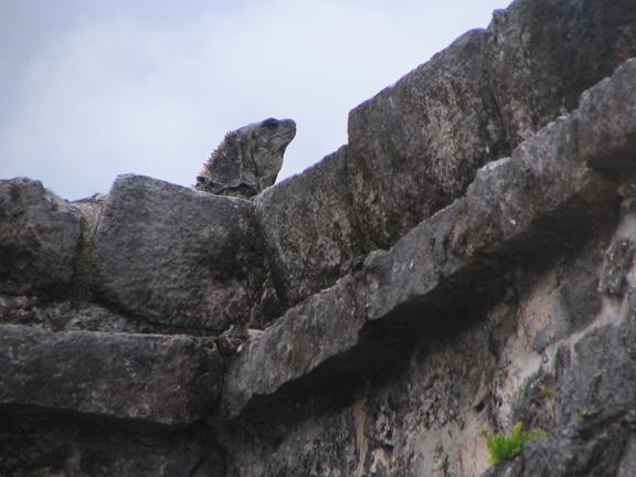 Stone Iguana (Tulum, Mexico)