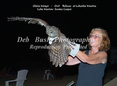 Entangled Owl Rescued at Santee-Saved by Steve Cothran and Gloria Moyer