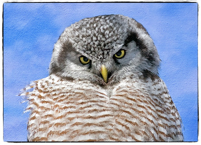hawkowl---40d-090221-1141-atelier-canvas-overly-with-border_22437208598_o