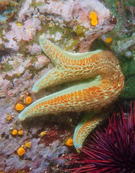 Deformed sea star