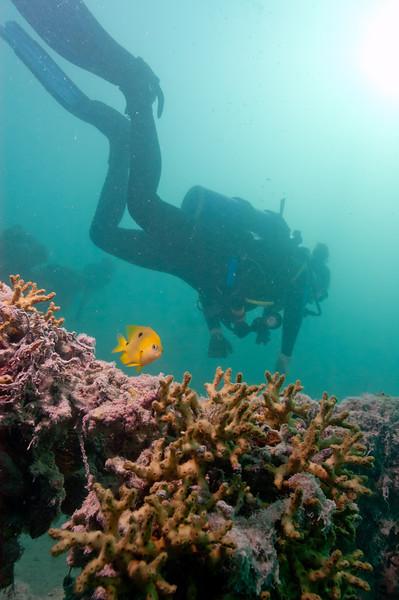Lionfish searching