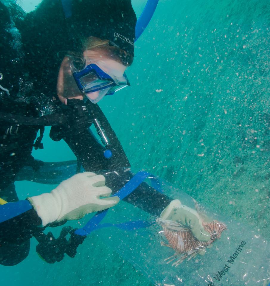 Lionfish eradication