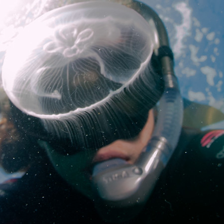 Jellyfish self portrait