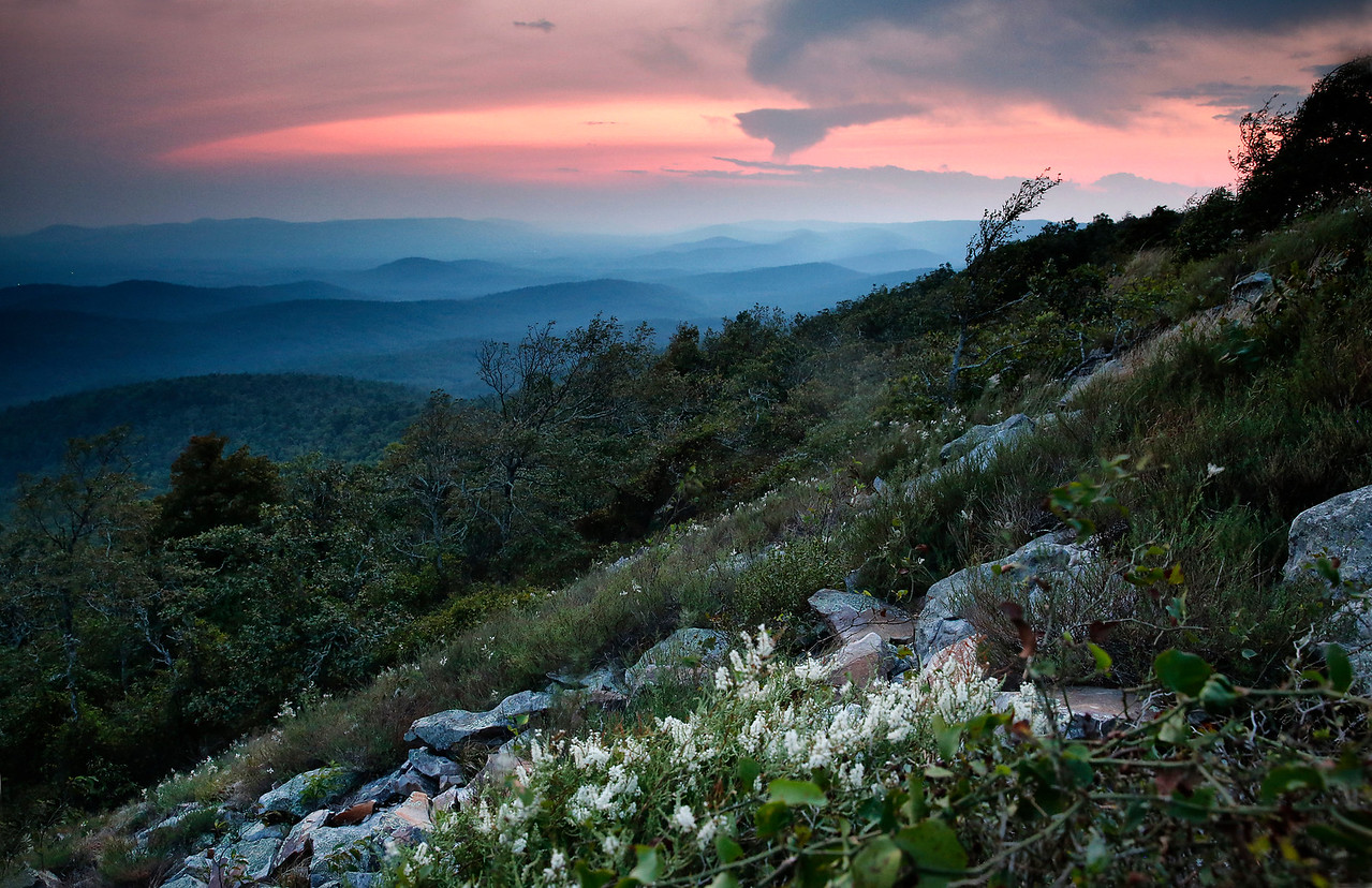 Jointweed Flowers at Sunset - Queen Wilhelmina State Park - Sept 2015