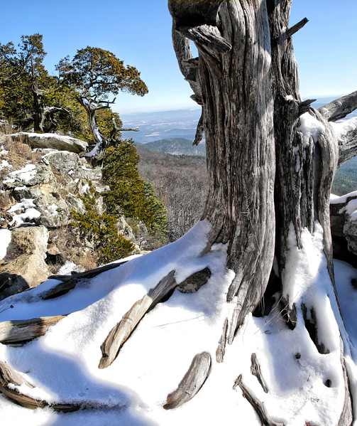 Looking From the Outside In - Mount Magazine State Park - Arkansas - Winter 2017