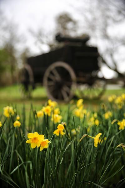 Jonquil Festival - Historic WashingtonState Park - Washington, AR - March 2015