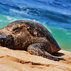 This Sea Turtle is most likely 150 years old and 500 pounds<br /> She was just chillin all day!! So Awesome