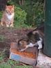 Cats take turns